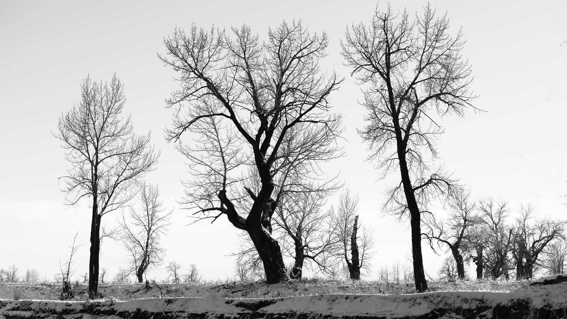 Black & white photo of bare trees and sky
